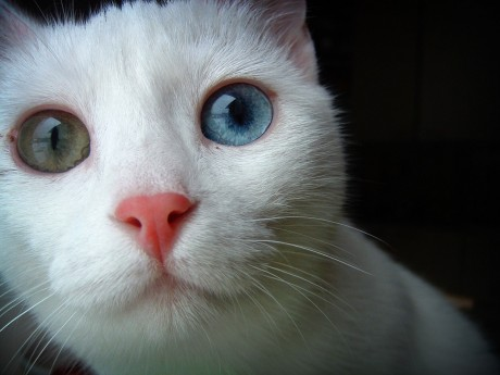 10 Health Facts That Could Save Your Cat's Life