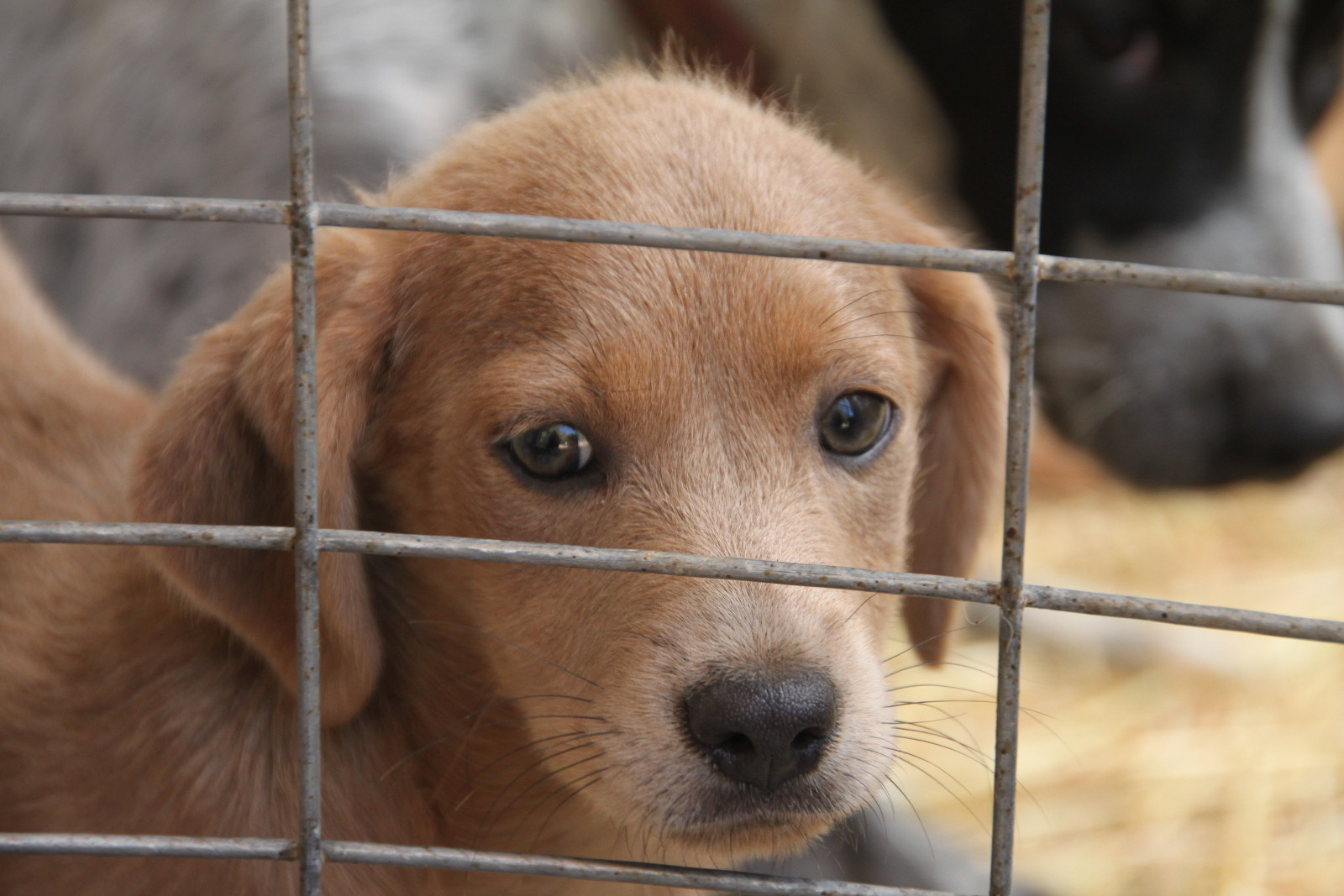 10 Ways to Help End Pet Homelessness