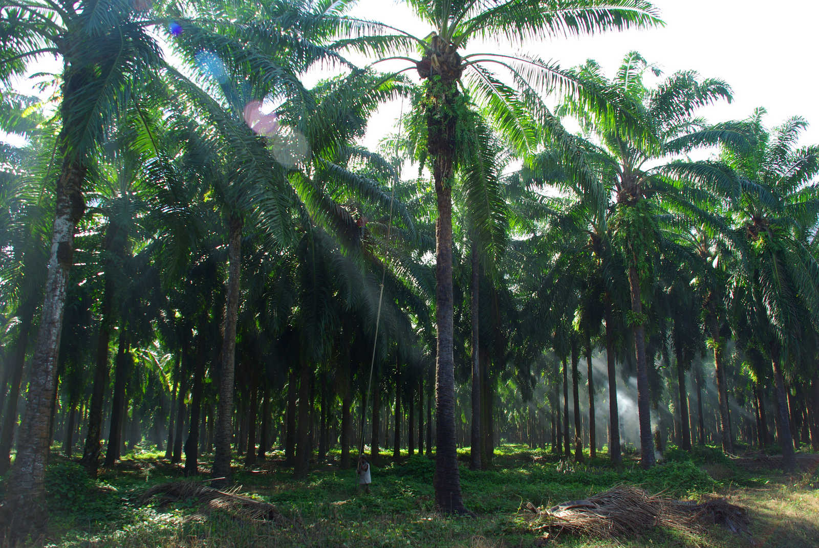 10 Companies Committed to Sourcing Sustainable Palm Oil