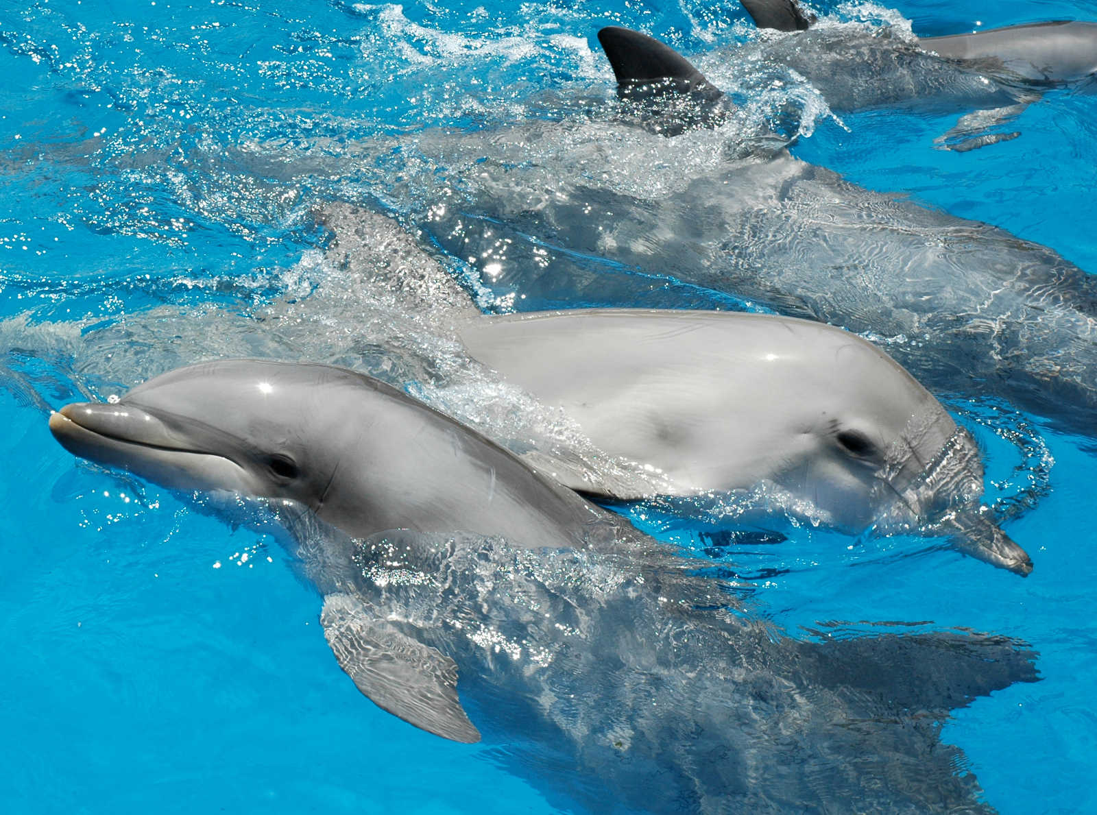 Dolphins Don't Belong in Captivity – Here's Why