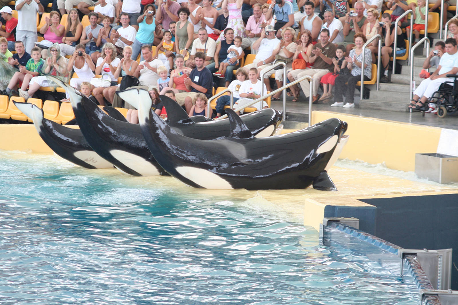 The Stories of 5 Orcas Still in Captivity