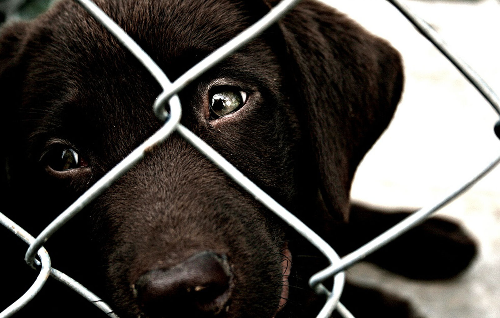 12 Shocking Facts about Pet Homelessness