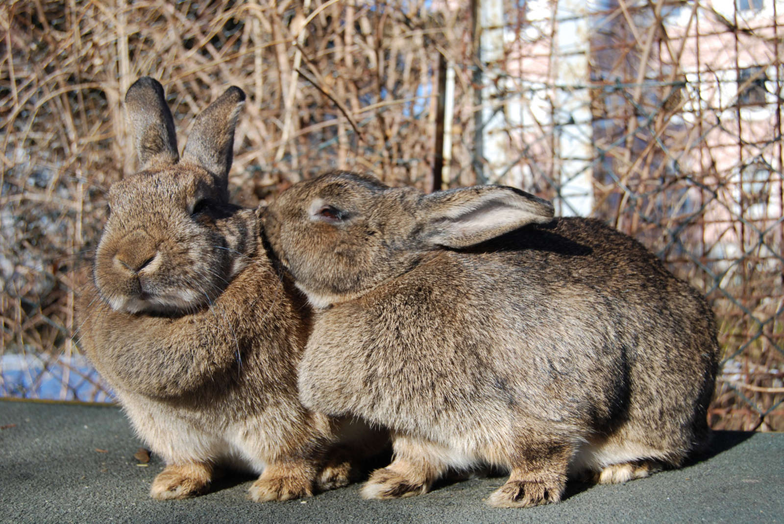 5 Hopping Good Reasons to Adopt a Rescued Rabbit