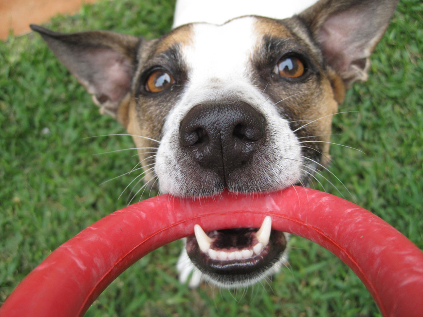 5 Common Dental Problems in Dogs and What To Do for a Healthy Dog Mouth