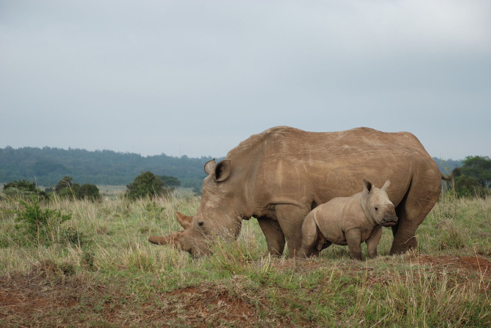 5 Amazing Sanctuaries Helping Wildlife Crime Victims
