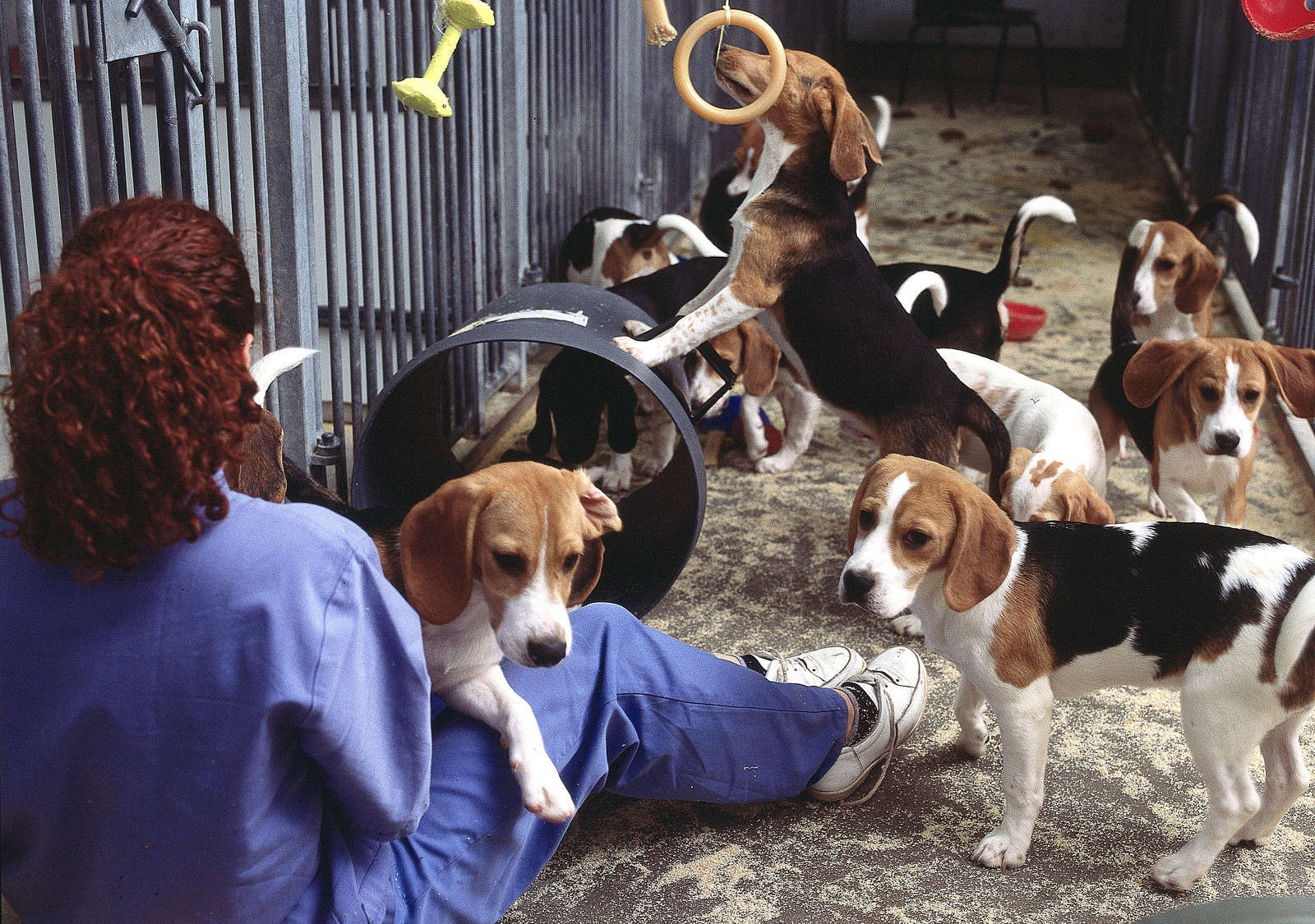 5 Unnecessary Animal Experiments Still Happening Now
