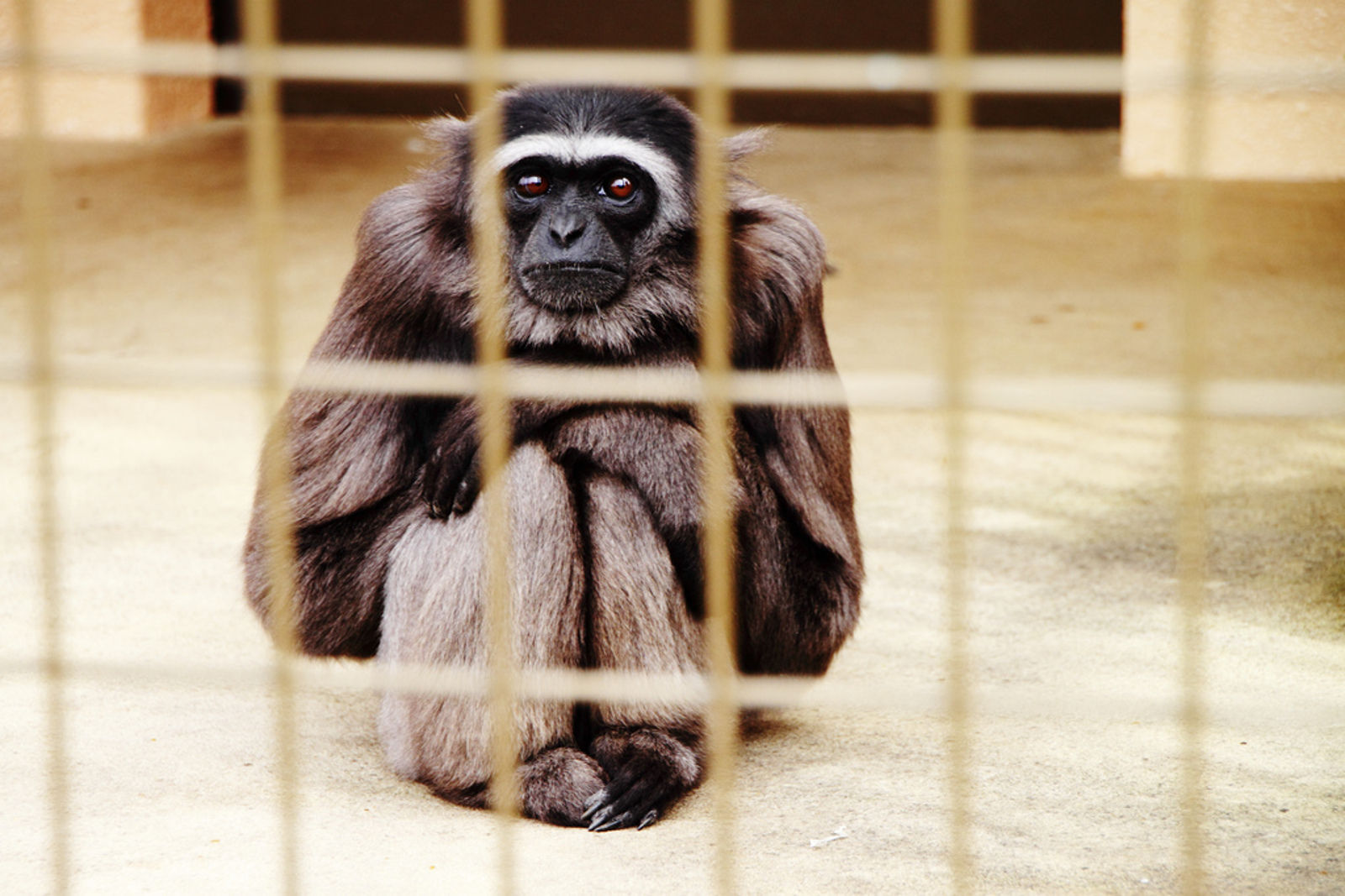 The Top 5 Misleading Claims Zoos Make