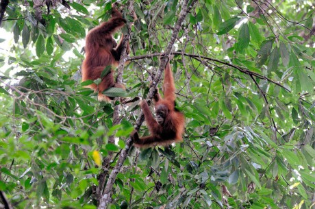 5 Reasons to Avoid Palm Oil