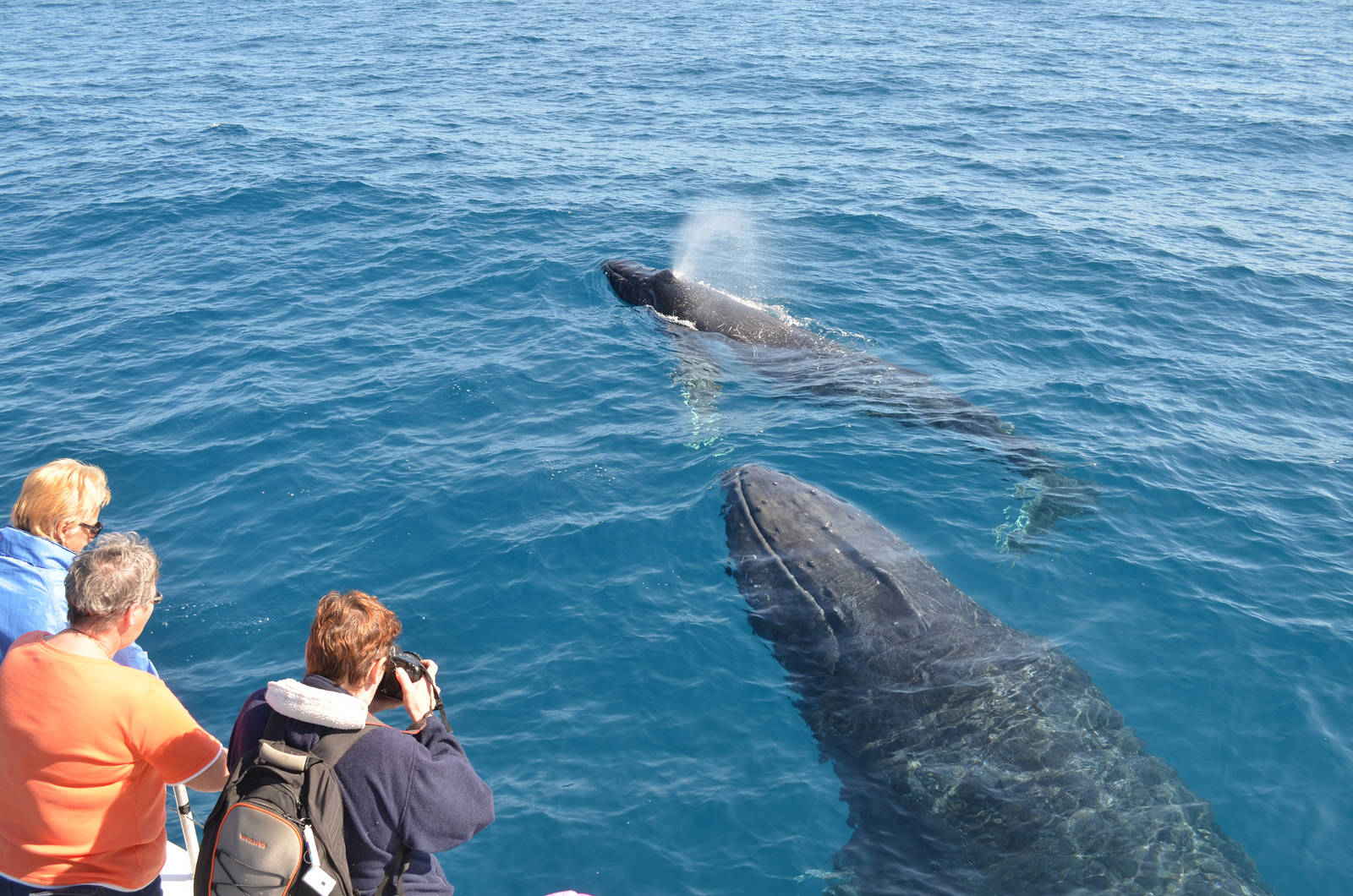 5 of the Most Stunning Wild Dolphin and Whale Encounters Captured on Film