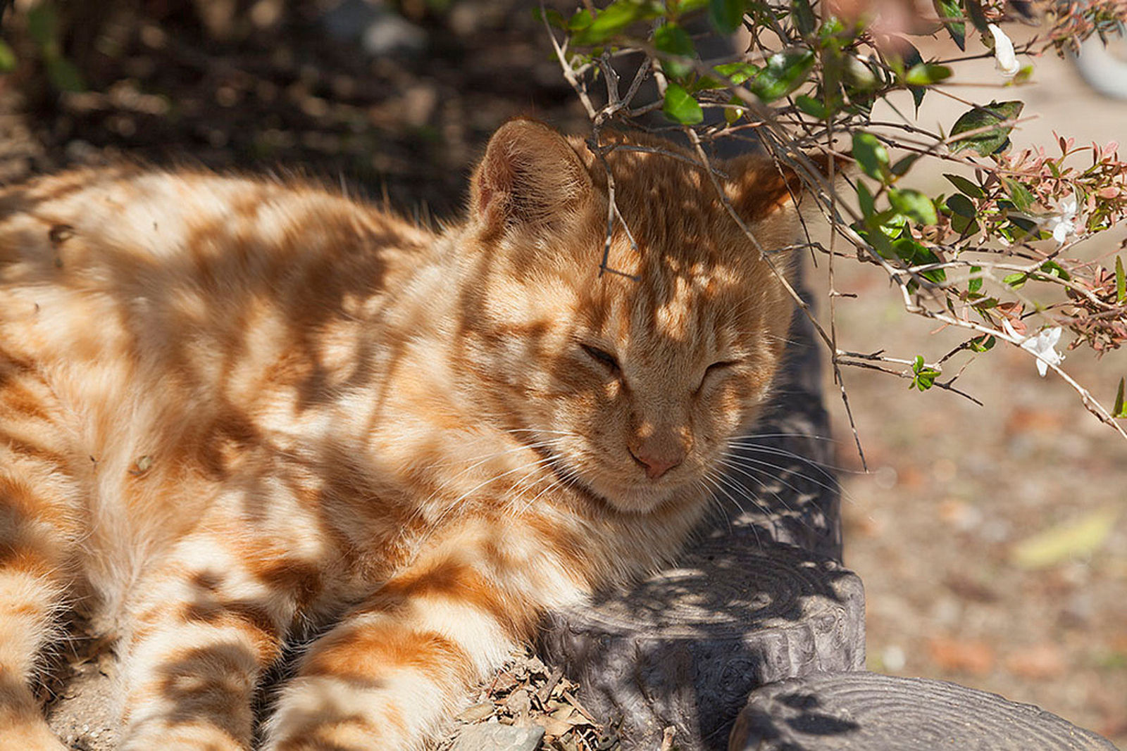 Tips on Caring for Feral Cats Year-Round
