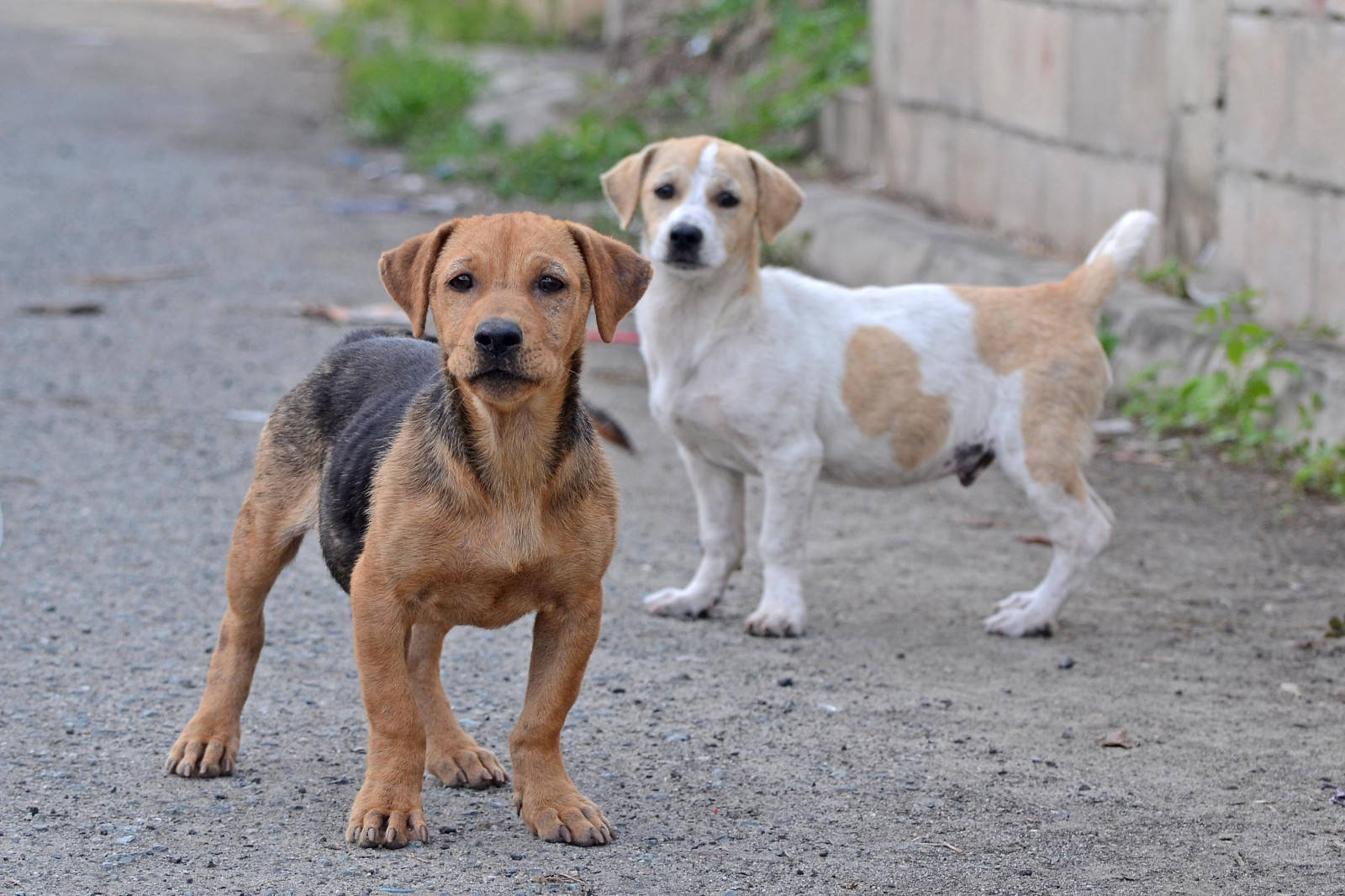 After Sochi Cull, How Do We Resolve the World's Stray Dog Problem?
