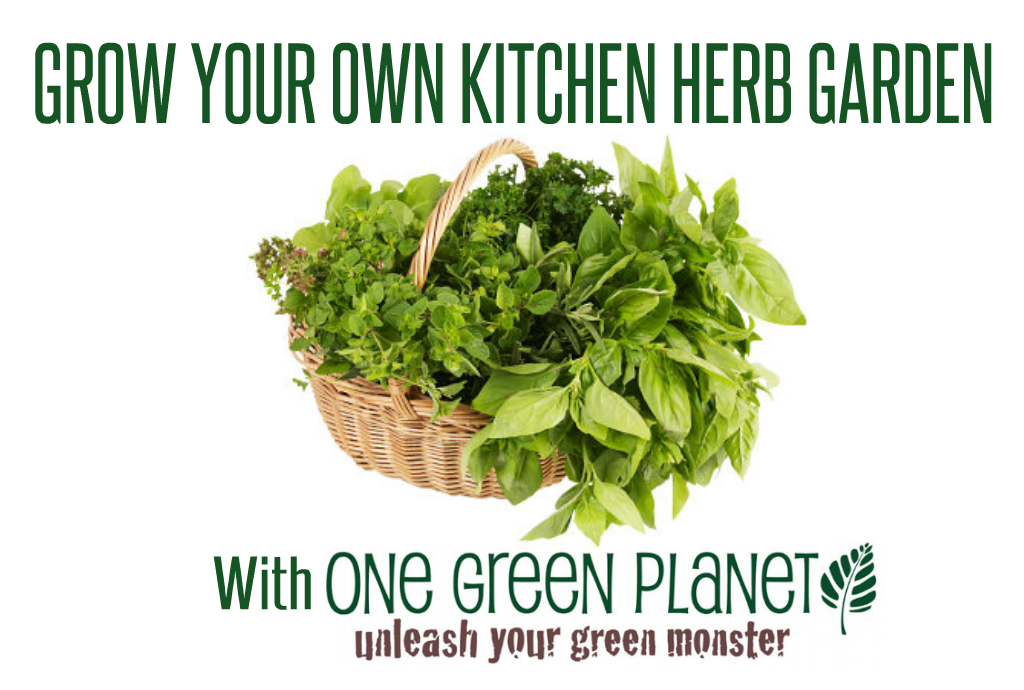 Growing Herbs in your Kitchen 101