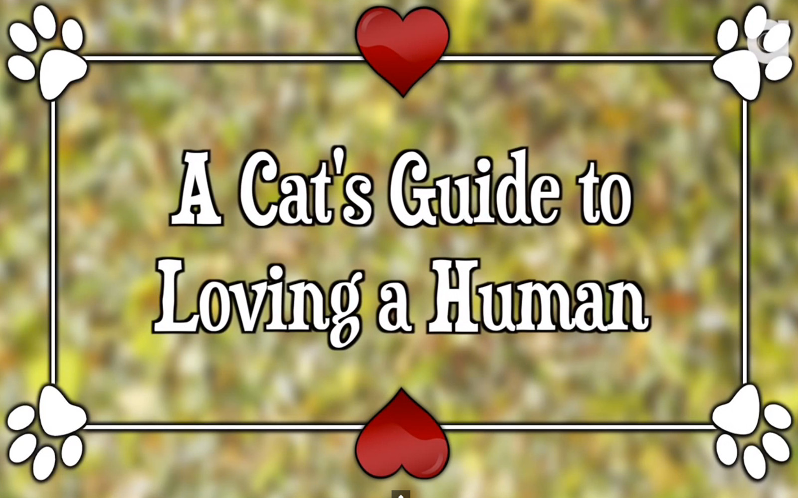 A Cat's Guide to Loving a Human (Video)