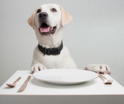 The 8 Best Pet-Friendly Restaurants in the U.S.