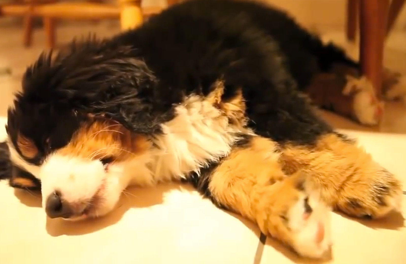 Dogs Dreaming Video Compilation