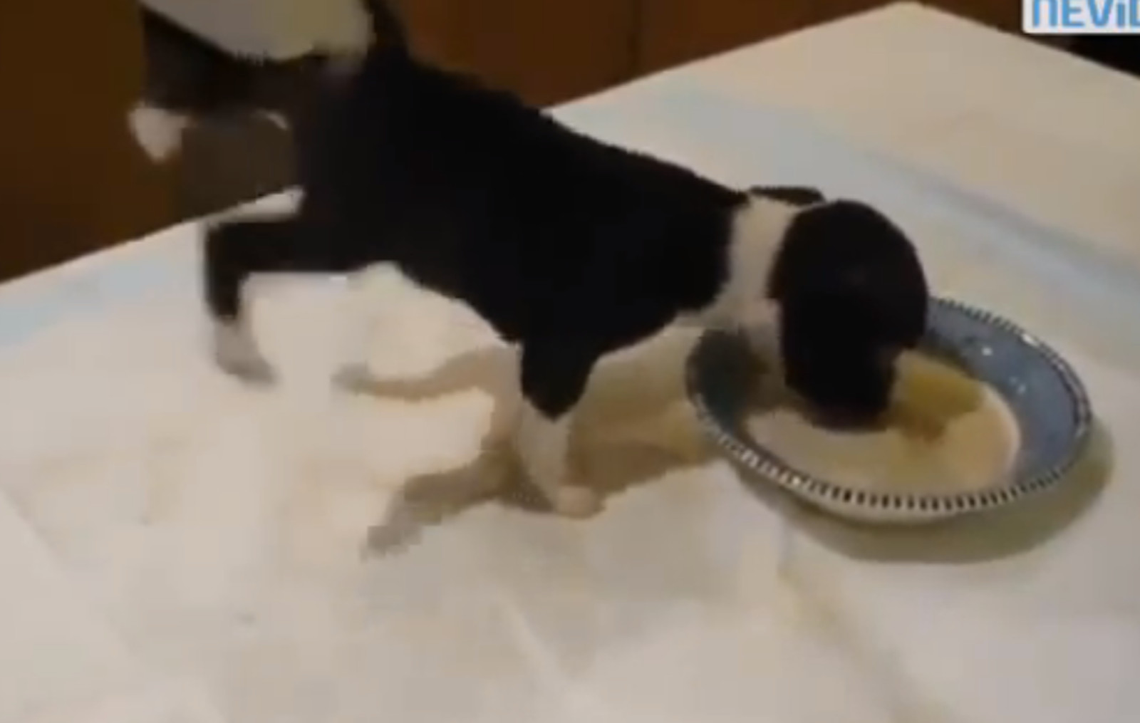 These Dogs Do Handstands for Their Food (Video)