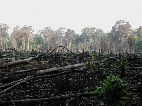 Beef Production is Killing the Amazon Rainforest