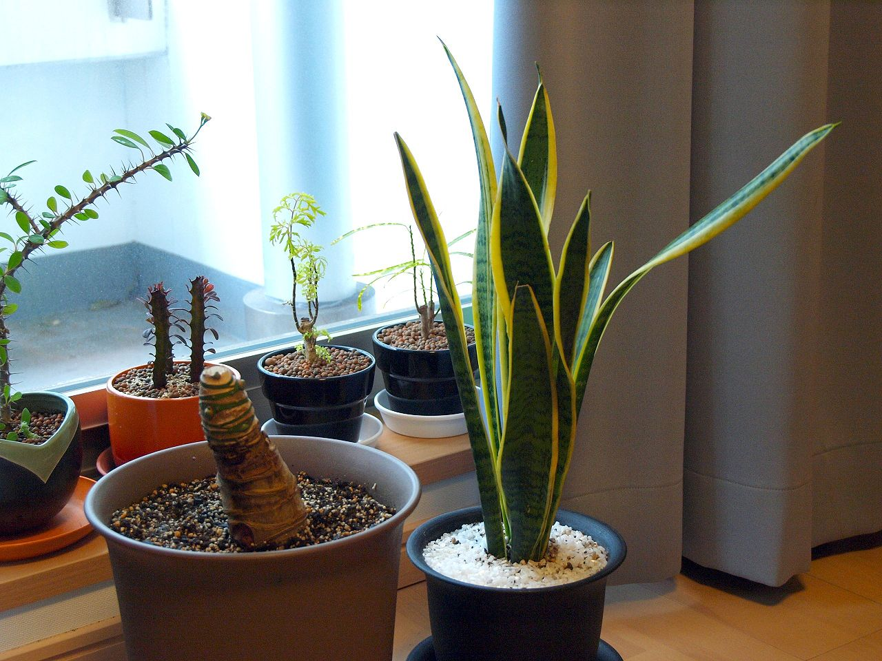 The 10 Best Houseplants for Improving the Air Quality In Your Home