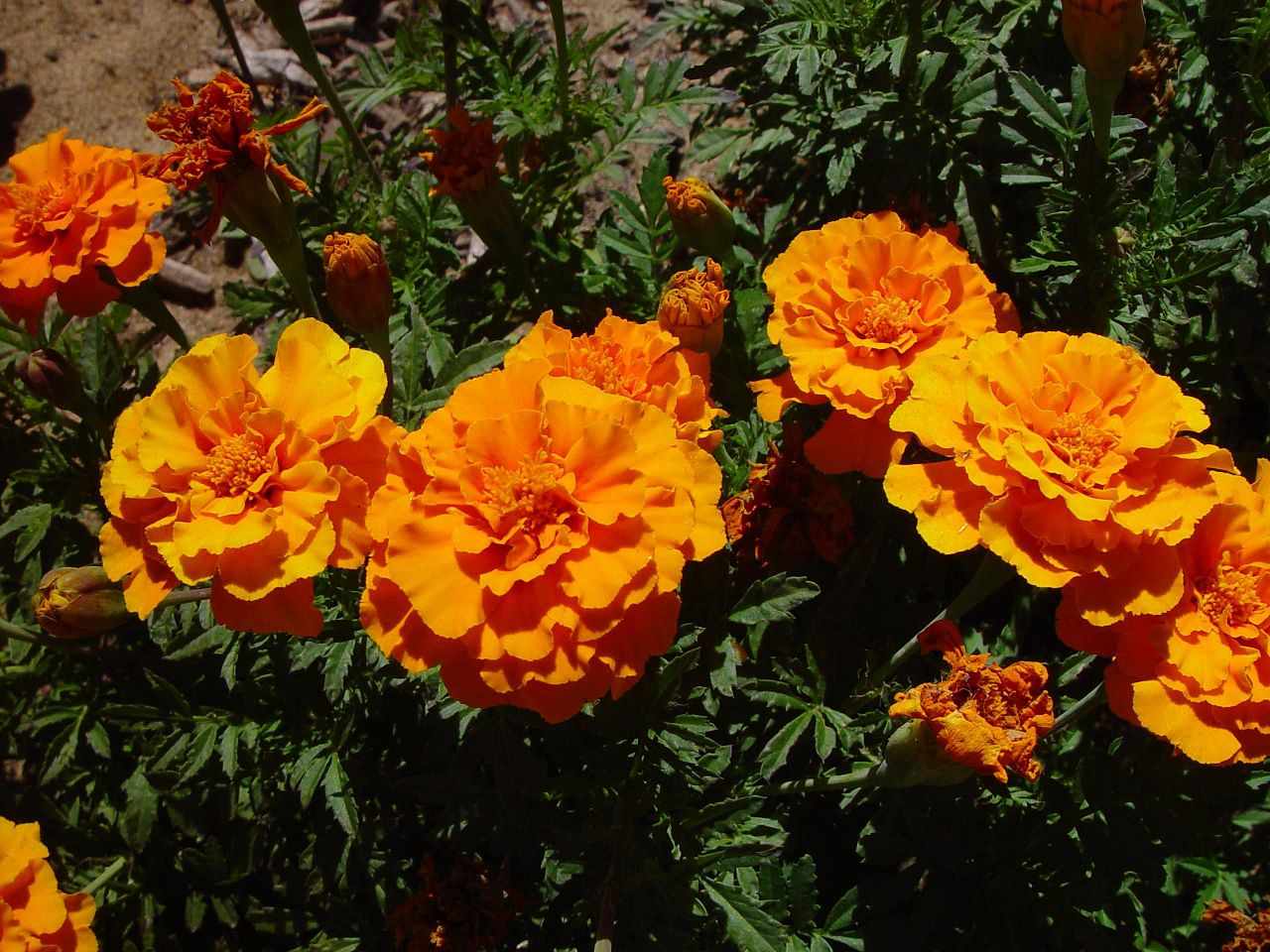 It's National Plant a Flower Day! Here are the 5 Easiest Flowers to Plant