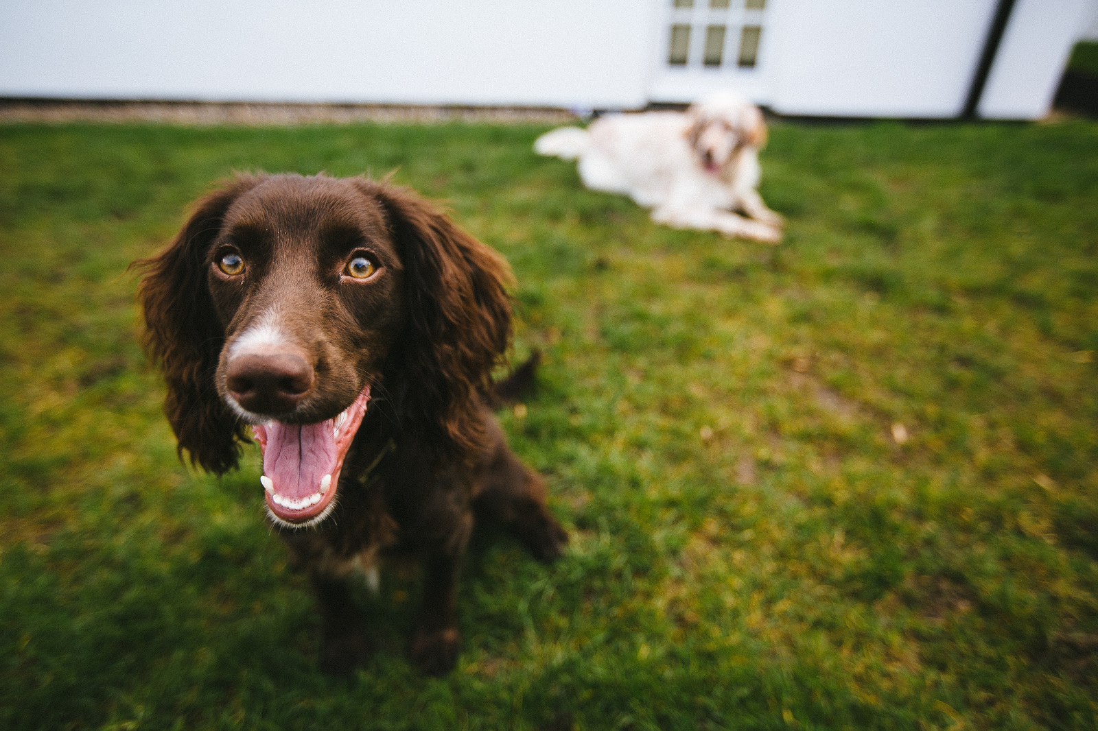 3 Common Puppy Behavior Problems and How To Correct Them Easily