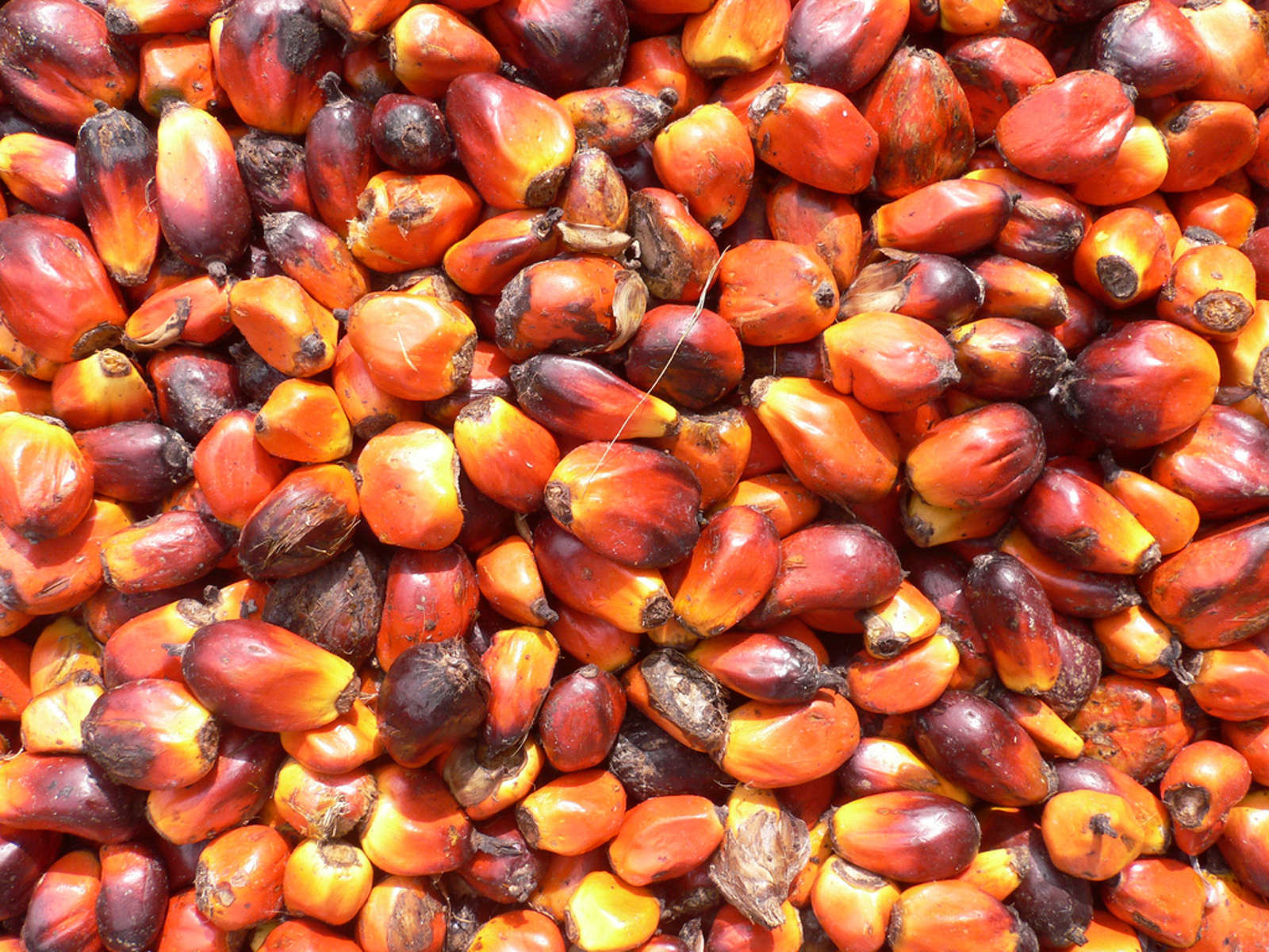 Put Down the Palm Oil: Planet Friendly Alternatives For Your Home