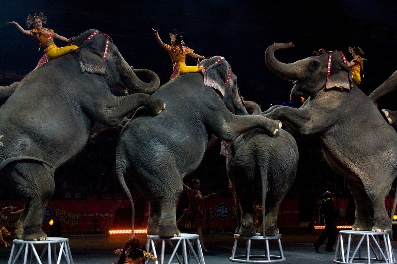 5 Ways You Can Help End the Use of Animals in Circuses