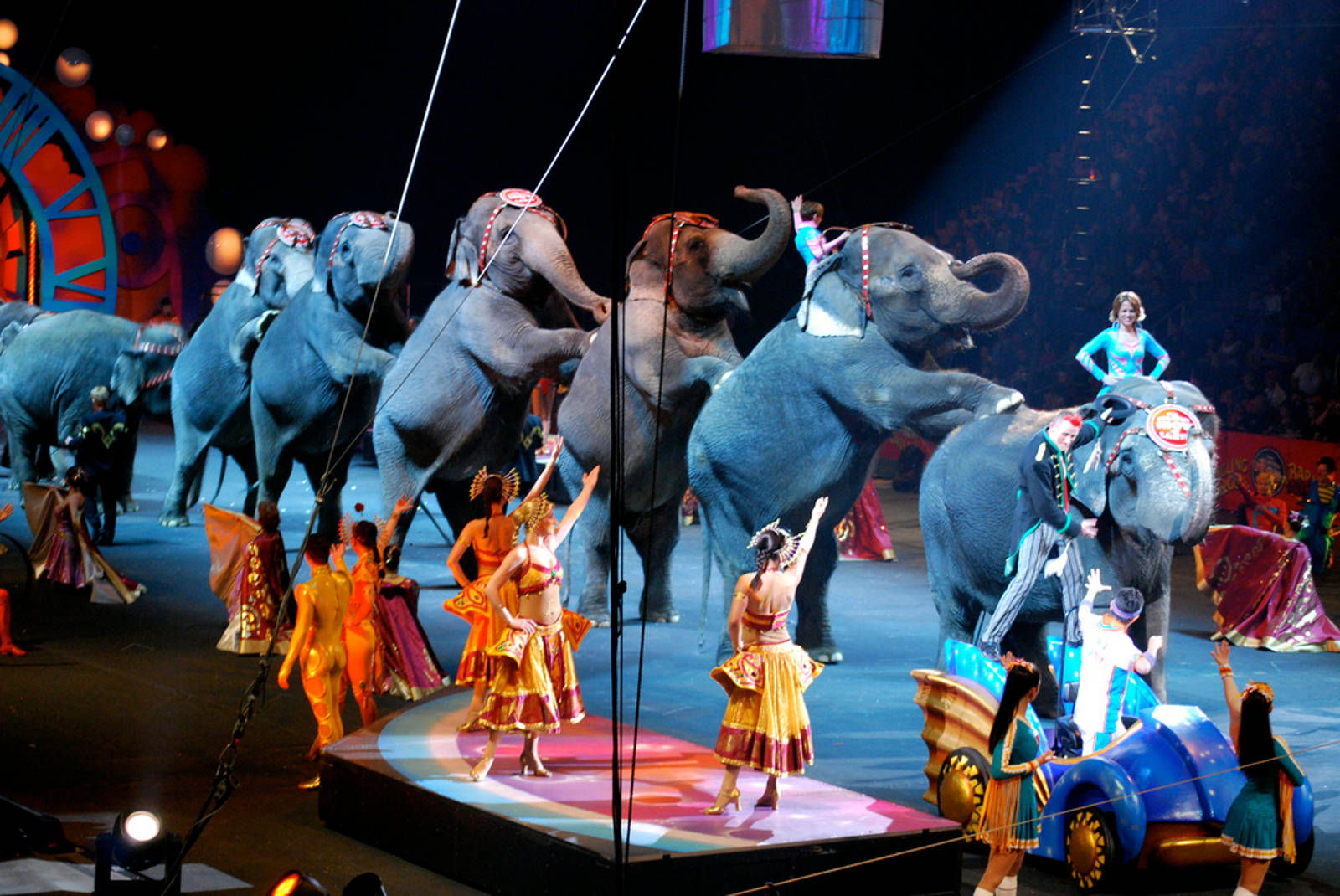 10 Countries That Have Banned Wild Animals in Circuses