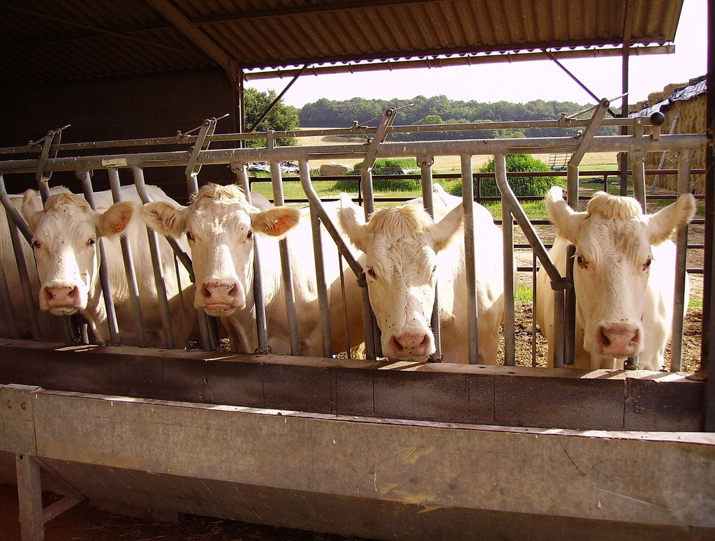 Why Ag-Gag Laws Are a Threat to Us All