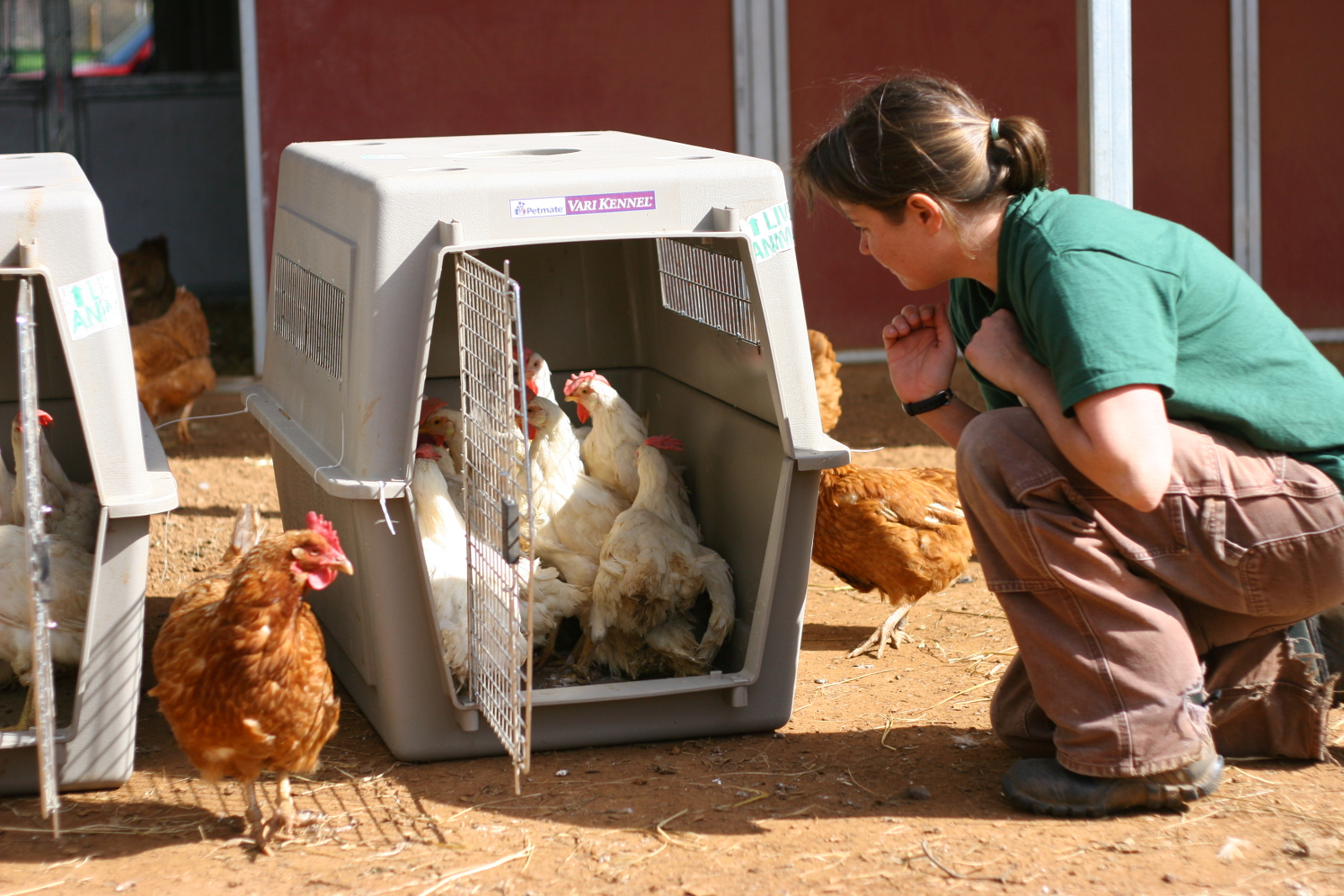 A Look Inside the Largest Farm Animal Rescue in California's History (PHOTOS)