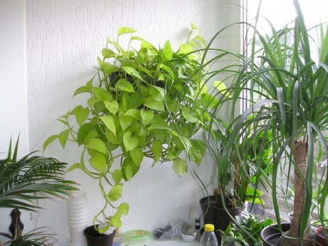 Short on Space? 5 Tips for Gardening Indoors with Limited Space