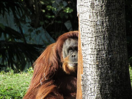 Can the Sumatra's Wildlife Recover from the Impacts of Dirty Palm Oil?