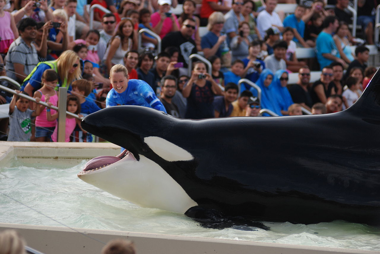 SeaWorld Orca Trainers Don Safety Vests...Will They Ever Learn