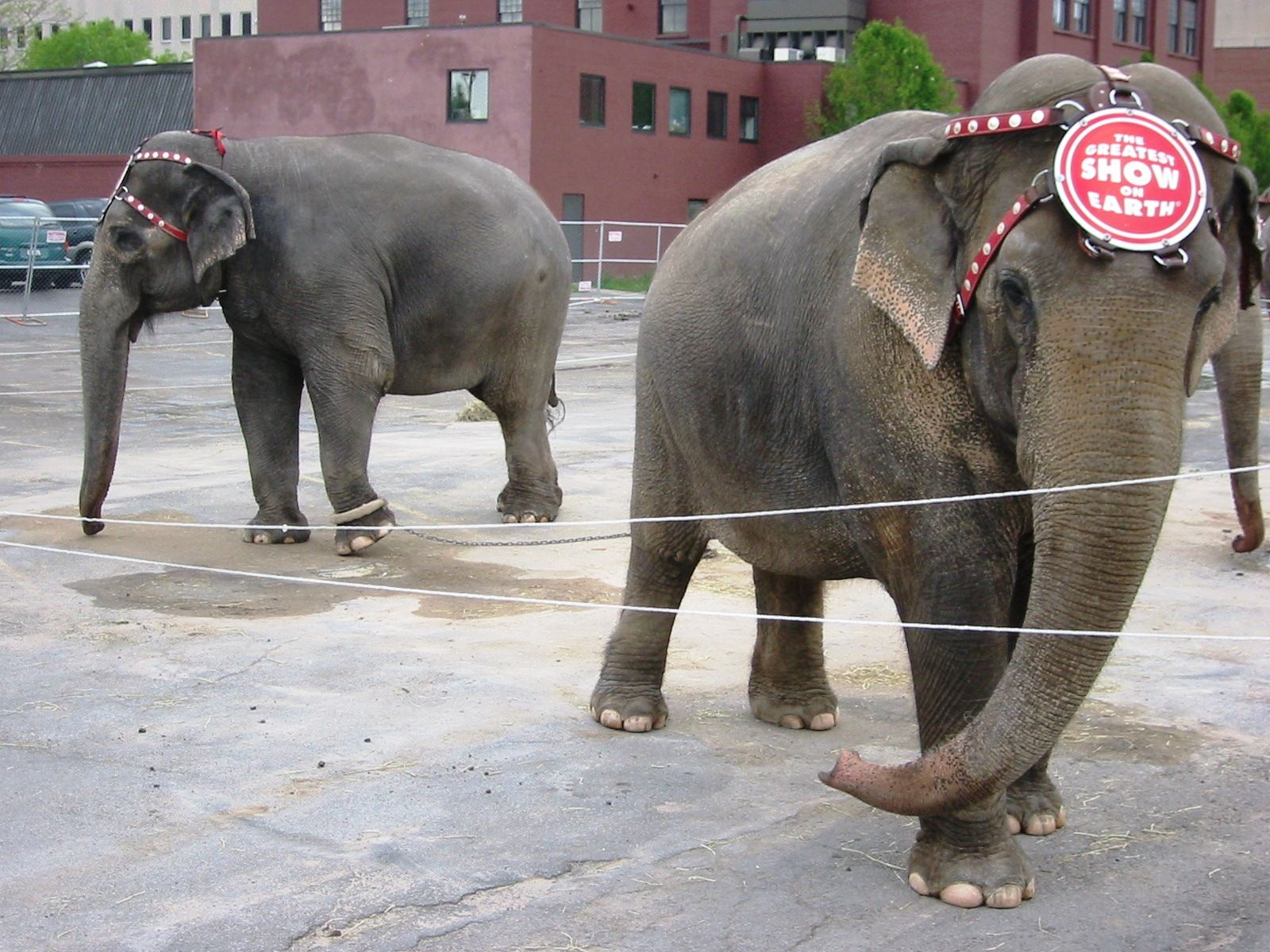 Abuse Cases That Prove We Need to Ban Circuses