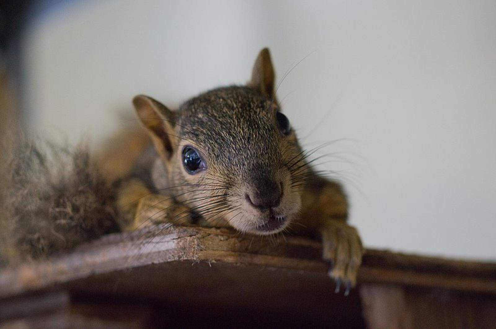 Excellent Wildlife Rehab Centers in the U.S.