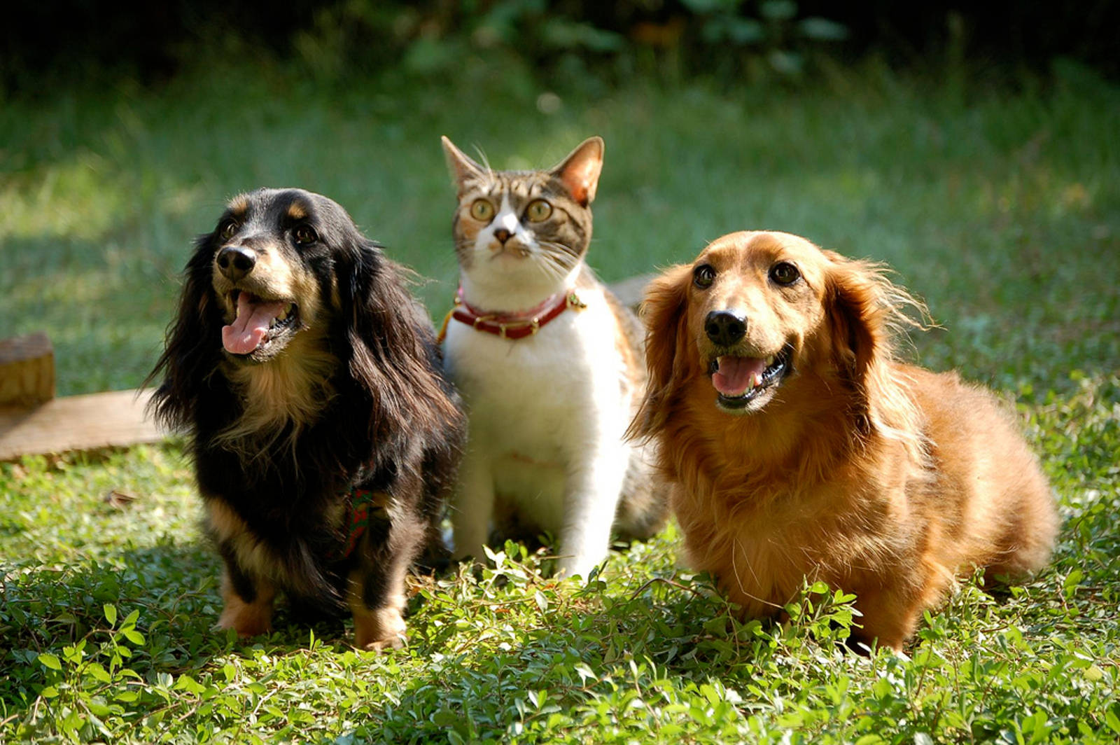 Separating Myths from Facts about Heartworm Disease in Dogs and Cats
