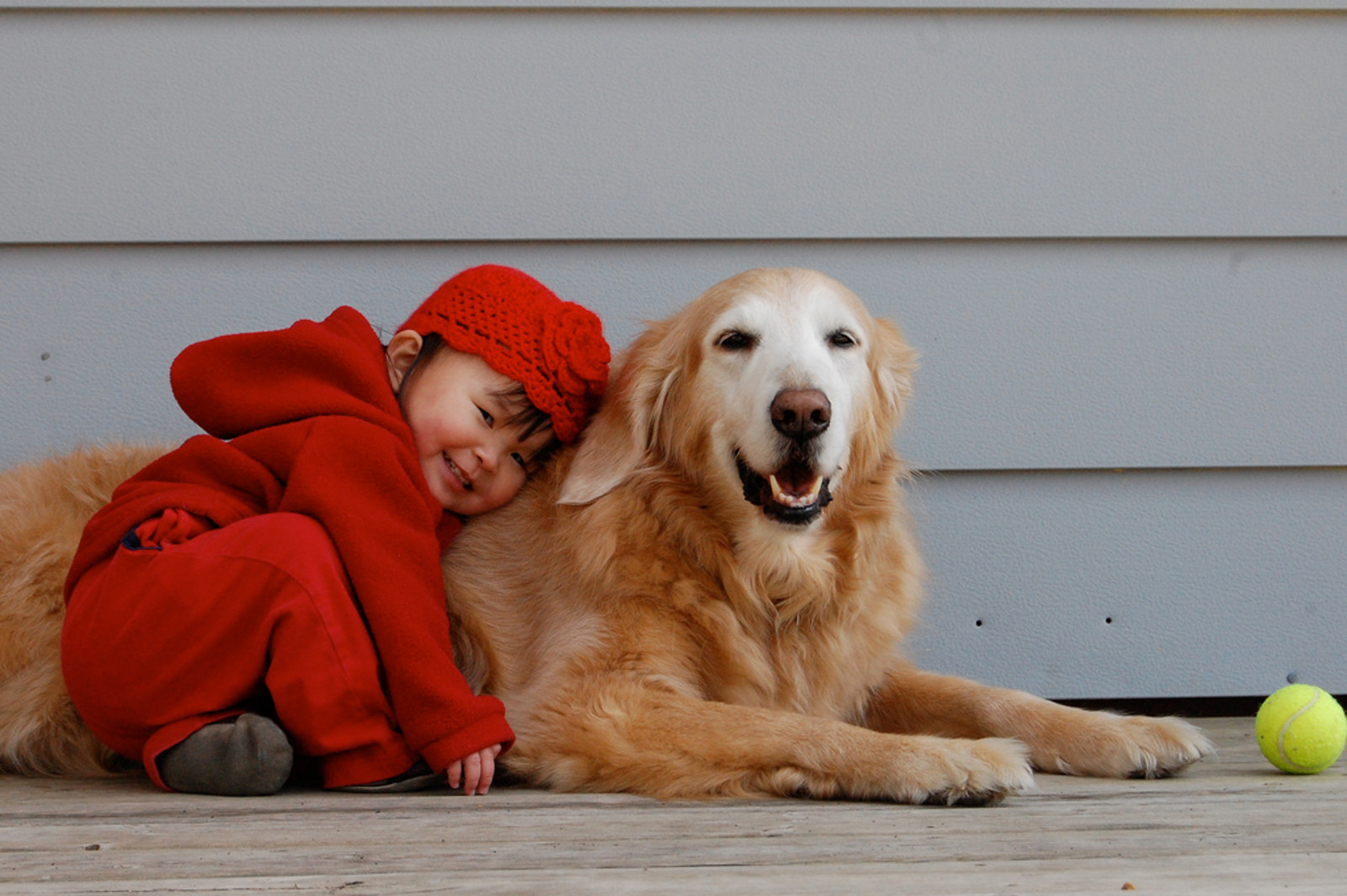 How to Keep Kids and Pets Safe Together