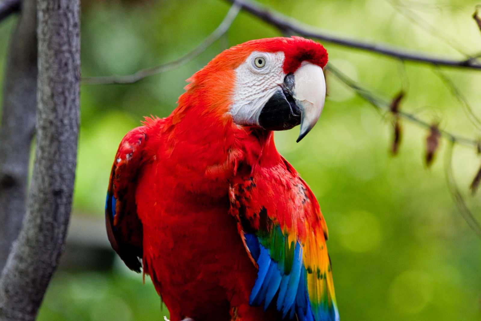 So You Think You Want a Parrot? Read This First