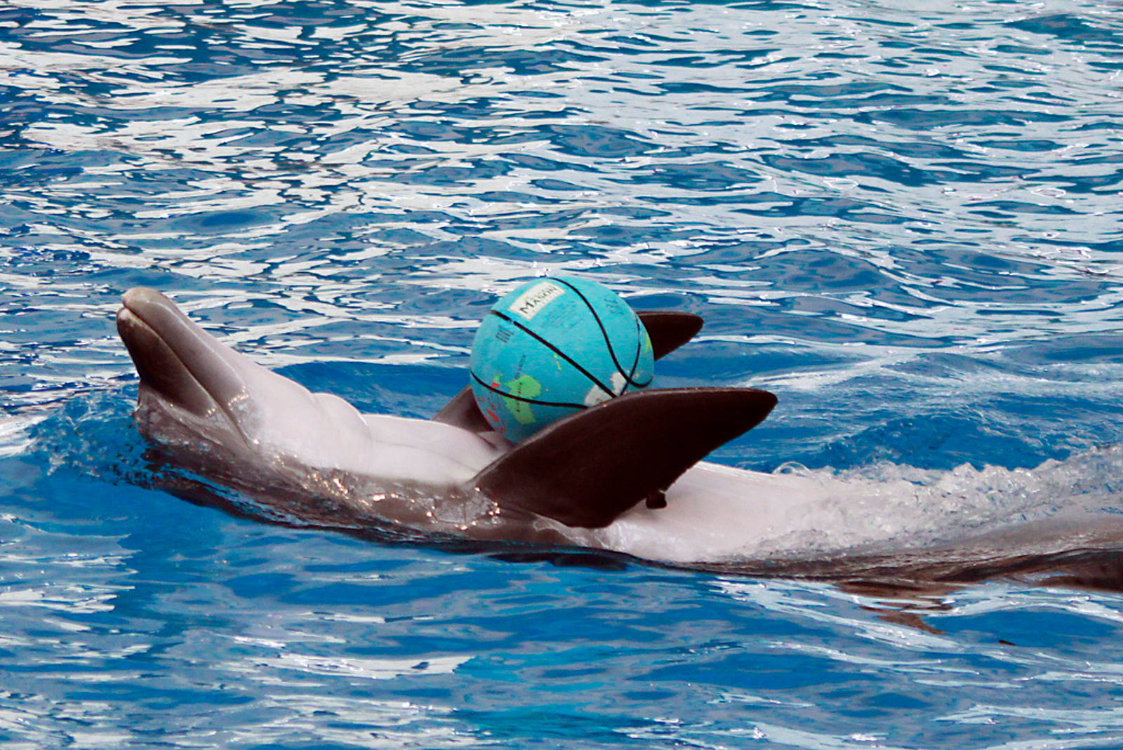 An End to the Trade in Captive Cetaceans IS Possible – Here's Why