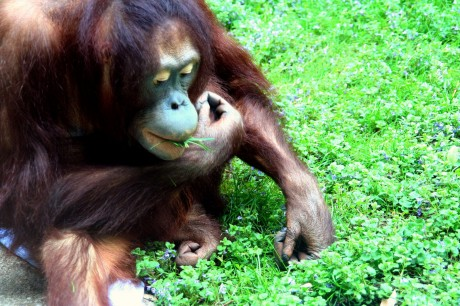 5 Animals Suffering at the Hands of the Palm Oil Industry