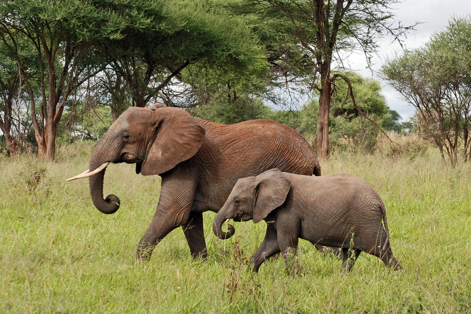 Conflict, Crime, and Corruption: The Illicit Brutality of the Ivory Trade