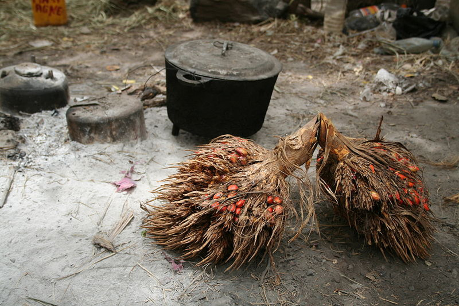 Top 10 Facts You NEED to Know about Palm Oil