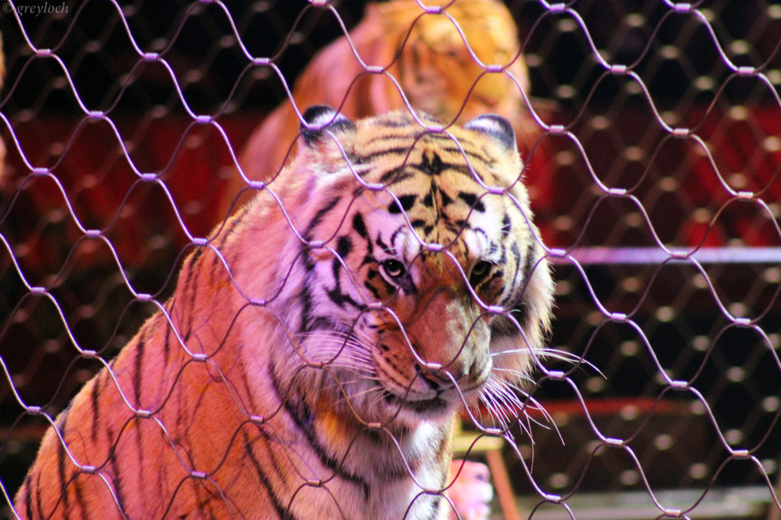 8 Reasons Why There is No 'Fun' in Animal Circuses