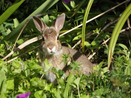 5 Reasons Not to Give a Bunny to Your Child as an Easter Gift (With Ethical and Fun Easter Animal Ideas)