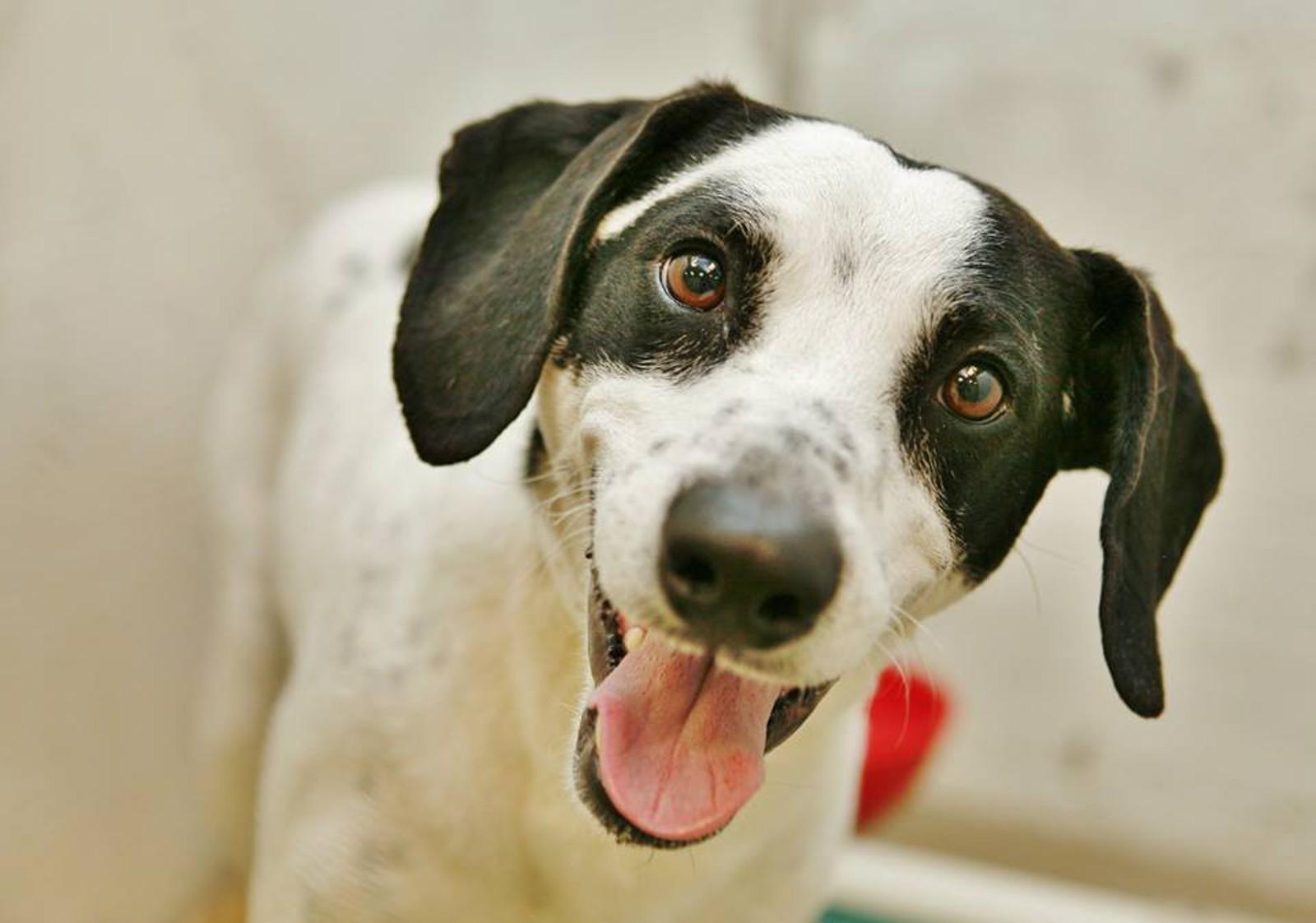 5 Reasons Why Everyone Should Adopt a Pet