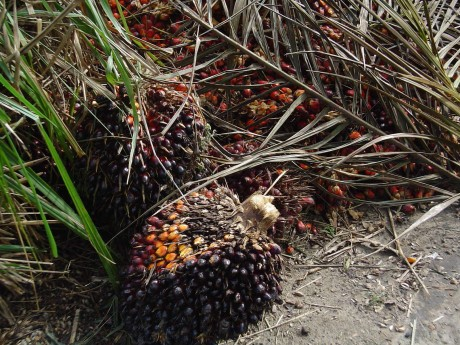 How to Wean Yourself Off Palm Oil