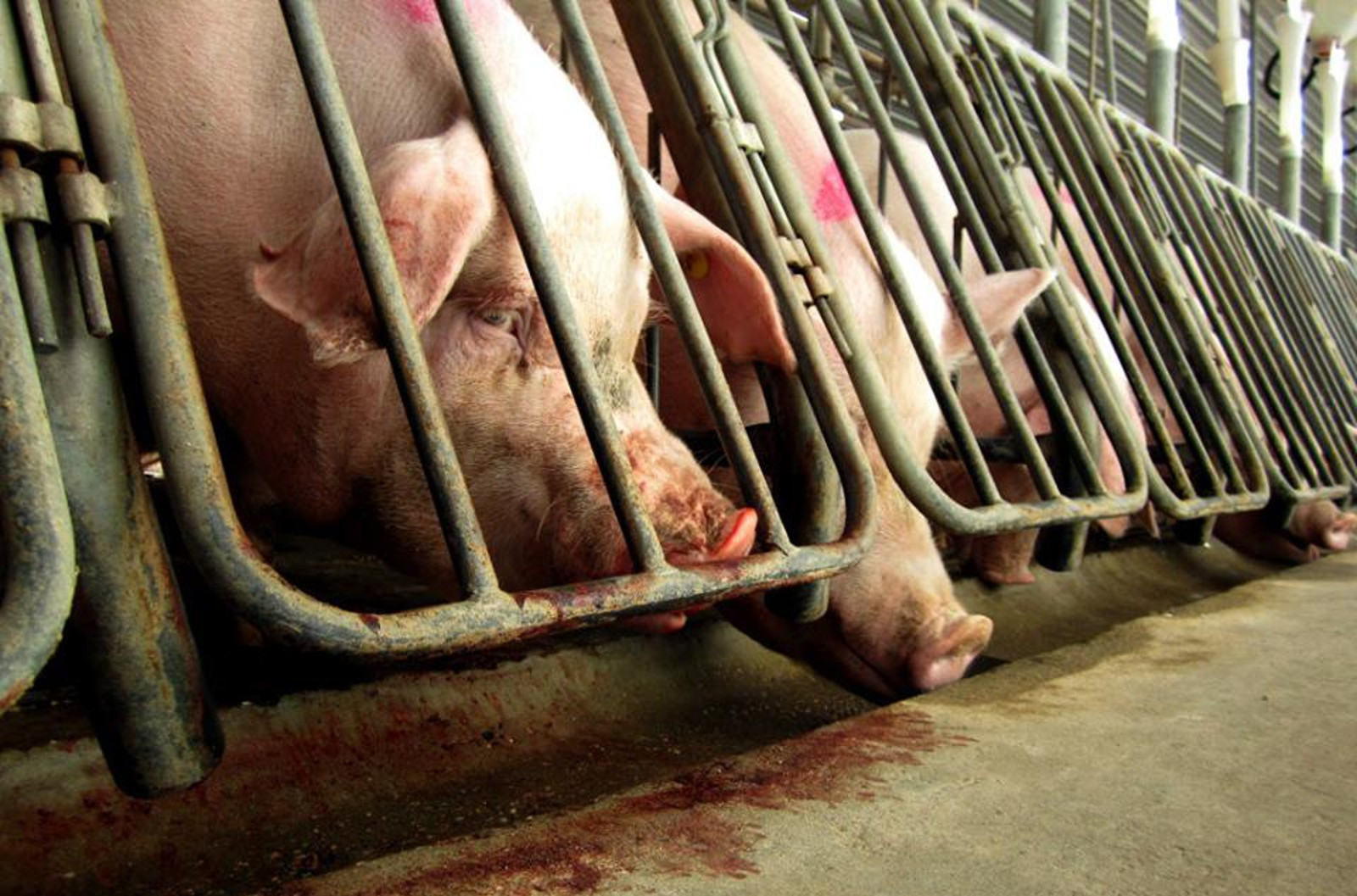 5 Things Factory Farming Harms Besides Animals