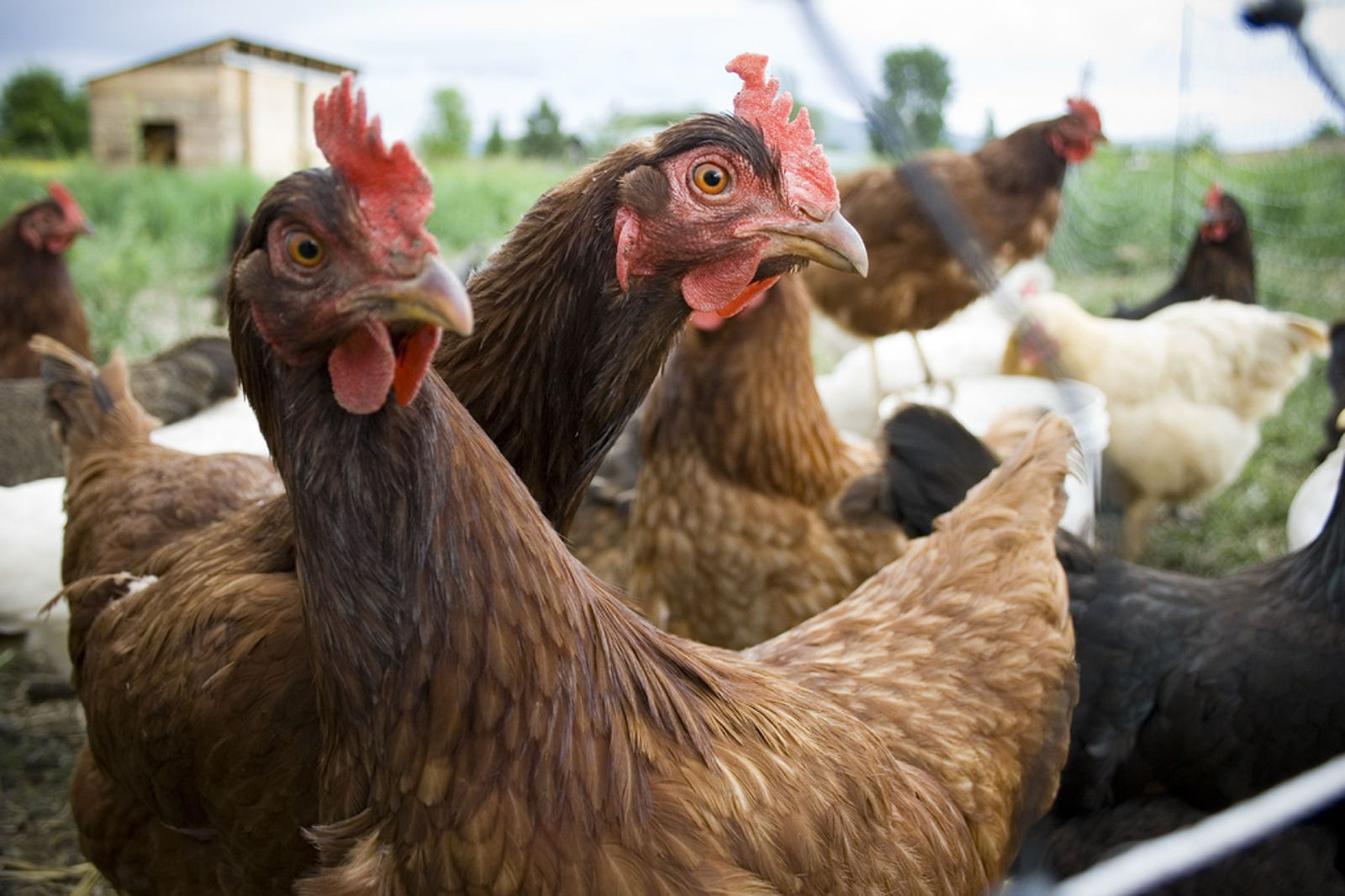 The USDA Sells Out Organic Standard to Protect Five Massive Factory Farms