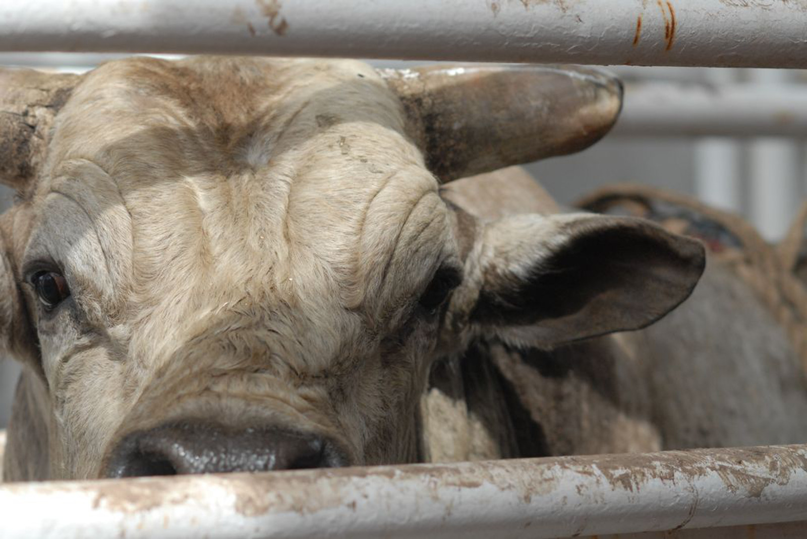 5 Reasons Why We Shouldn't Slaughter Animals for Food