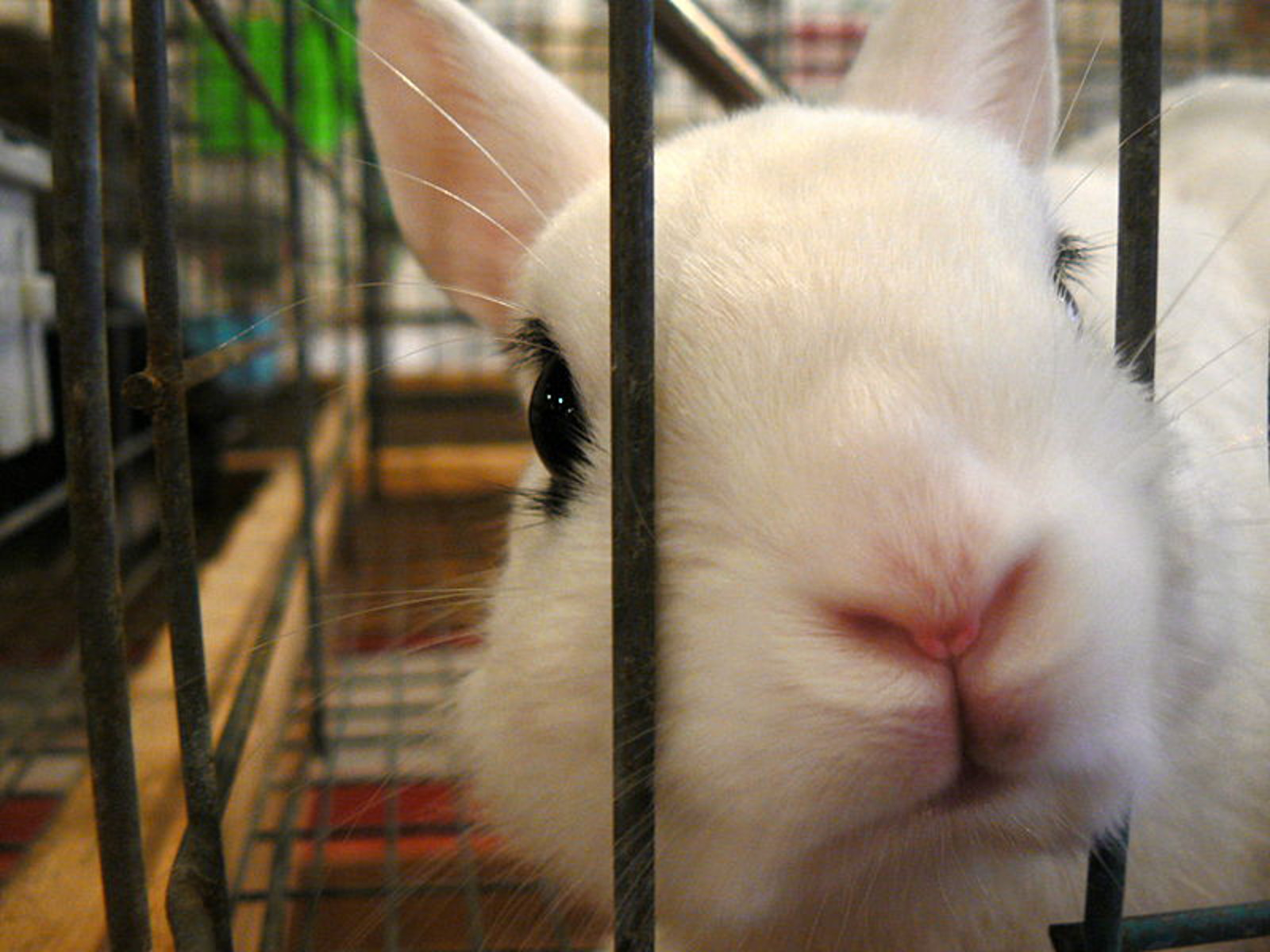Undercover Investigations Prove that We Need to Ban Cosmetic Testing on Animals