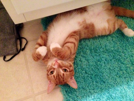 Marmalade the Ginger Cat Shows You How to Use Your Bathroom as a Gym (VIDEO)